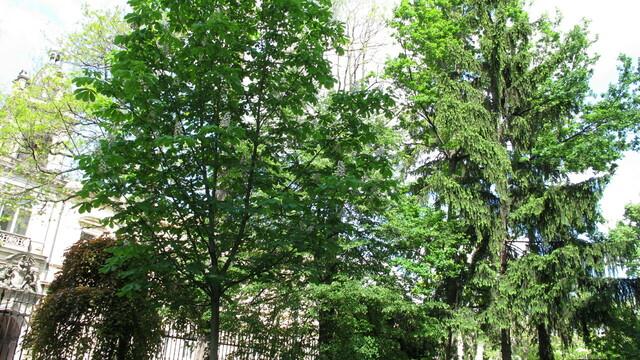 Internationale Phänologische Pflanzgärten (IPG)